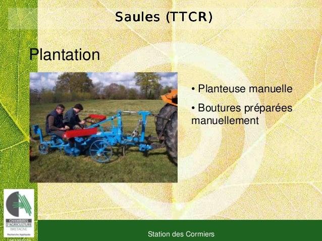 081030101 Station des Cormiers Saules (TTCR)Saules (TTCR)Saules (TTCR)Saules (TTCR) Plantation • Planteuse manuelle • Bout...