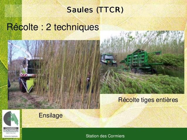 081030101 Station des Cormiers Saules (TTCR)Saules (TTCR)Saules (TTCR)Saules (TTCR) Ensilage Récolte tiges entières Récolt...