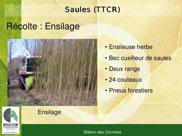 081030101 Station des Cormiers Saules (TTCR)Saules (TTCR)Saules (TTCR)Saules (TTCR) Ensilage Récolte : Ensilage • Ensileus...
