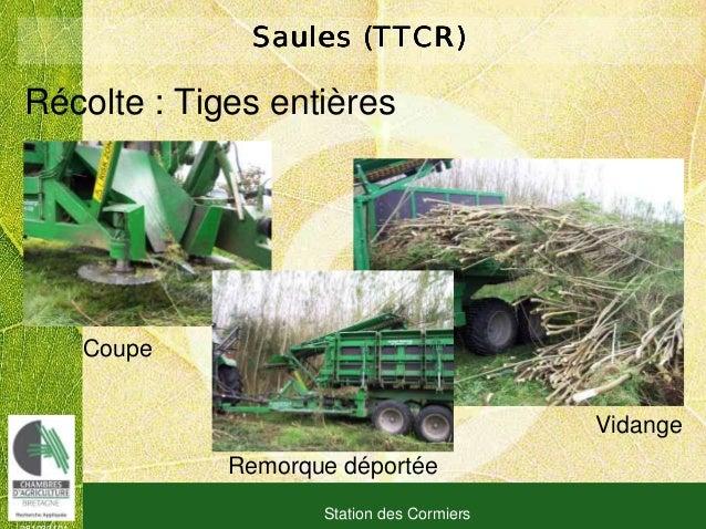 081030101 Station des Cormiers Saules (TTCR)Saules (TTCR)Saules (TTCR)Saules (TTCR) Vidange Récolte : Tiges entières Coupe...