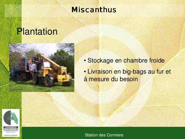 081030101 Station des Cormiers MiscanthusMiscanthusMiscanthusMiscanthus Plantation • Stockage en chambre froide • Livraiso...