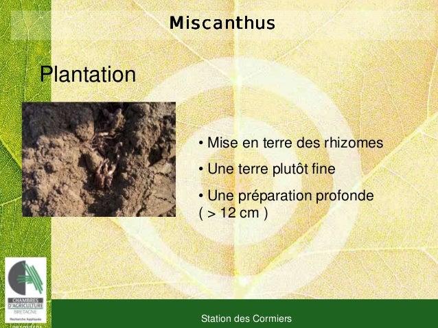 081030101 Station des Cormiers MiscanthusMiscanthusMiscanthusMiscanthus Plantation • Mise en terre des rhizomes • Une terr...