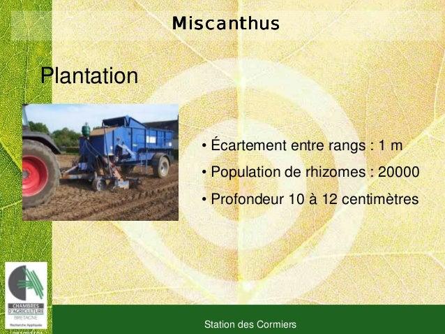 081030101 Station des Cormiers MiscanthusMiscanthusMiscanthusMiscanthus Plantation • Écartement entre rangs : 1 m • Popula...