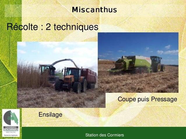 081030101 Station des Cormiers MiscanthusMiscanthusMiscanthusMiscanthus Ensilage Coupe puis Pressage Récolte : 2 techniques