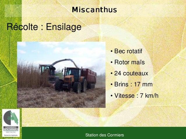 081030101 Station des Cormiers MiscanthusMiscanthusMiscanthusMiscanthus Récolte : Ensilage • Bec rotatif • Rotor maïs • 24...