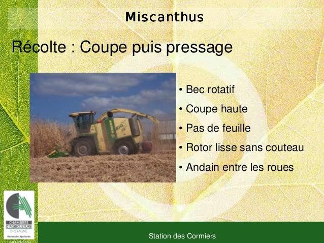 081030101 Station des Cormiers MiscanthusMiscanthusMiscanthusMiscanthus Récolte : Coupe puis pressage • Bec rotatif • Coup...
