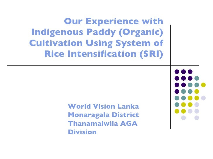 Our Experience with Indigenous Paddy (Organic) Cultivation Using System of Rice Intensification (SRI) World Vision Lanka  ...