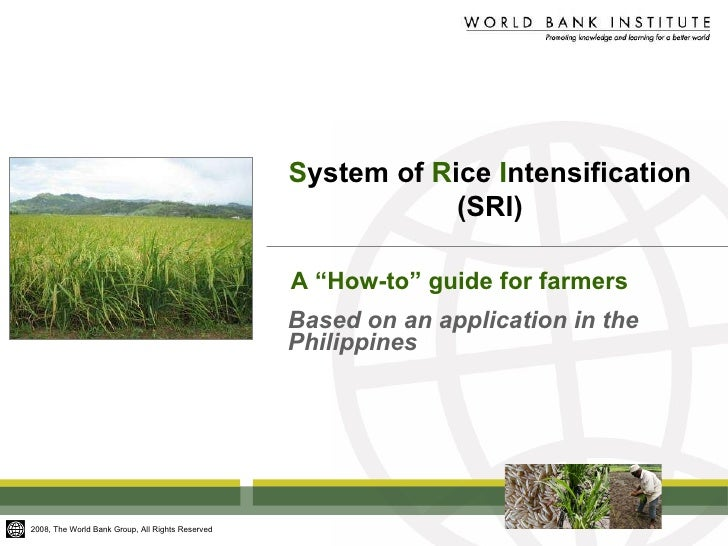 """S ystem of  R ice  I ntensification (SRI) Based on an application in the Philippines A """"How-to"""" guide for farmers"""