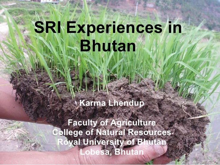 SRI Experiences in Bhutan Karma Lhendup Faculty of Agriculture College of Natural Resources Royal University of Bhutan Lob...