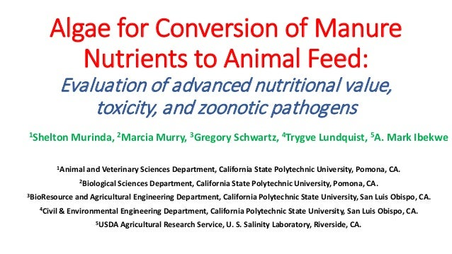 Algae For Conversion of Manure Nutrients to Animal Feed