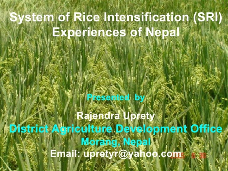 System of Rice Intensification (SRI) Experiences of Nepal Presented  by Rajendra Uprety District Agriculture Development O...