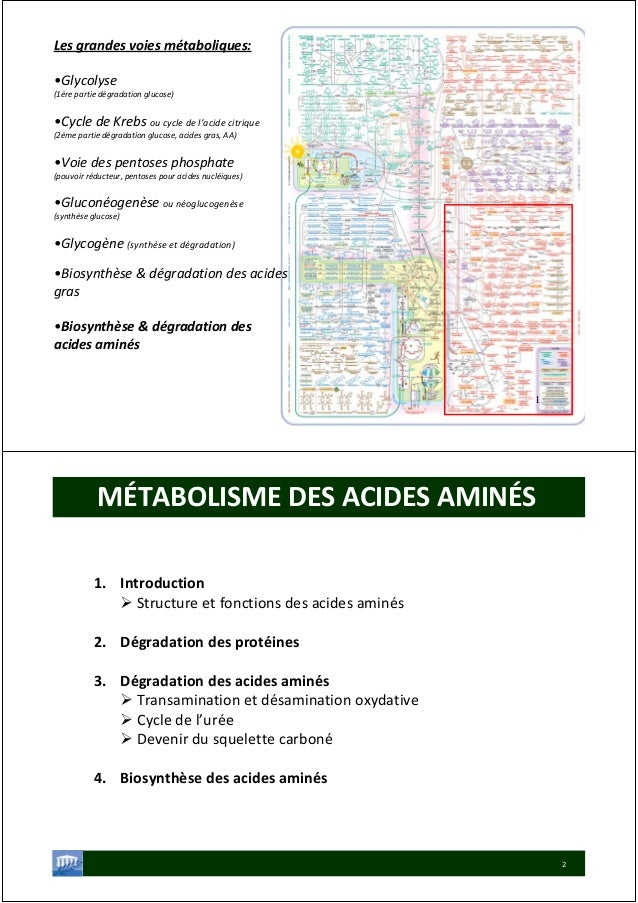 Lesgrandesvoiesmétaboliques: •Glycolyse (1èrepartiedégradationglucose) •CycledeKrebsoucycledel'acidecitrique...
