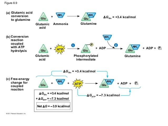 Image result for how atp drives chemical work