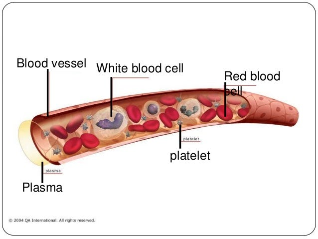 blood physiology Red Blood Cells Function blood vessel red blood cell platelet plasma white blood cell