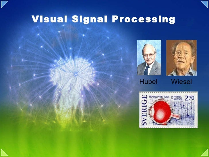 Visual Signal Processing Hubel  Wiesel