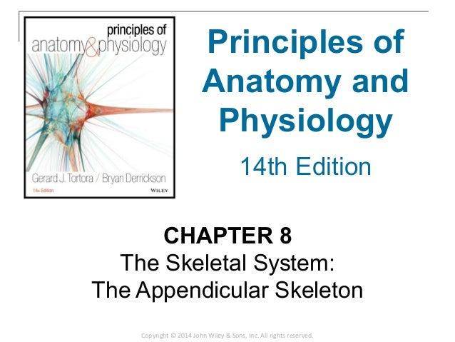 08 Chapter 8 The Skeletal System Appendicular Skeleton