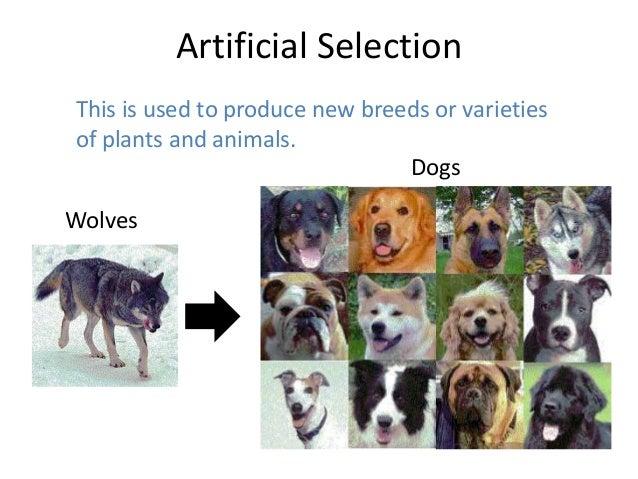 Artificially Breeding Dogs