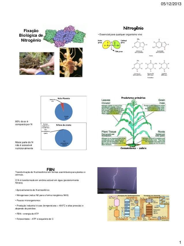 05/12/2013  Nitrogênio  Fixação Biológica de Nitrogênio  • Essencial para qualquer organismo vivo  Restante 6%  N do Plane...