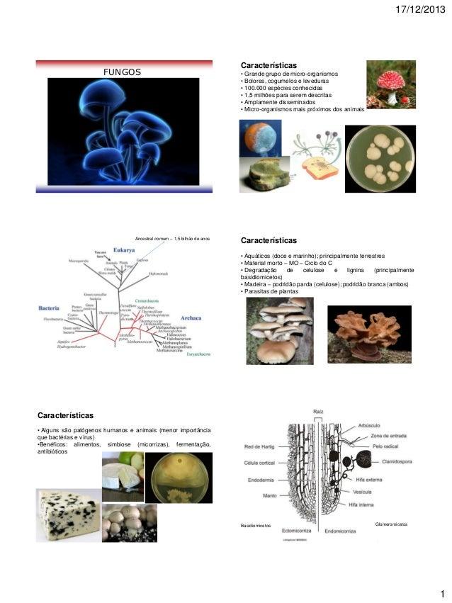 17/12/2013  FUNGOS  Ancestral comum – 1,5 bilhão de anos  Características • Grande grupo de micro-organismos • Bolores, co...