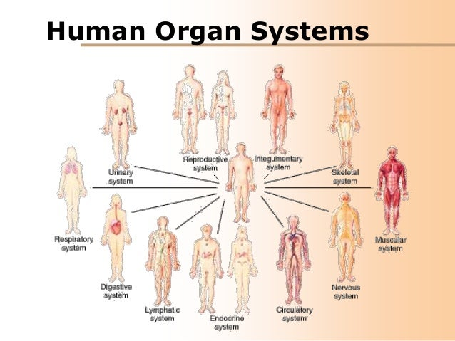 08 human organ systems, Human Body