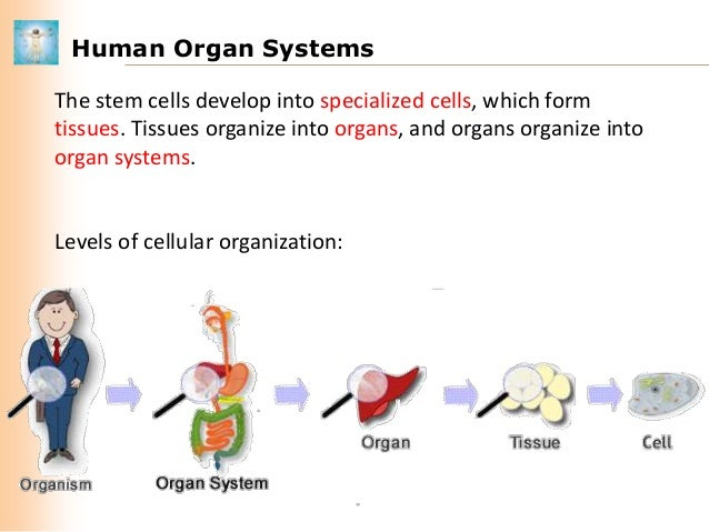 relationship between cells tissues organs and organ systems in plants