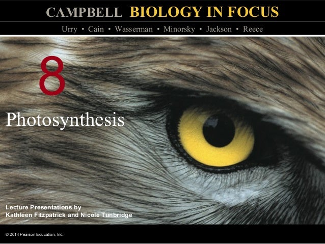 Biology In Focus Chapter 8