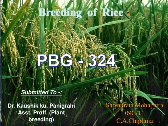 Presentation on Breeding Techniques of Rice