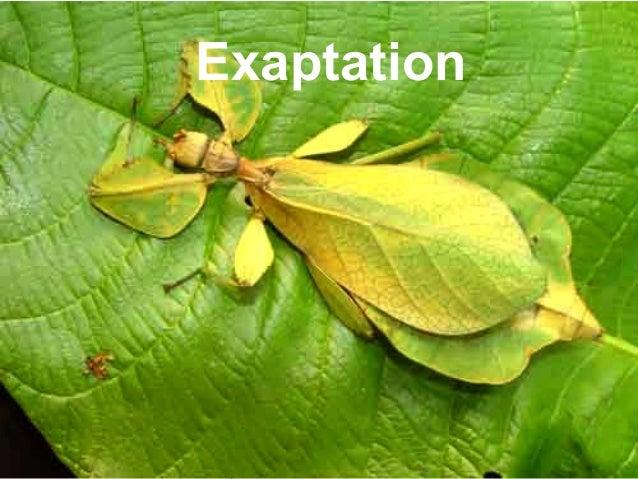 P r oj Exaptation