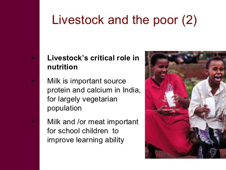 Livestock and the poor (2)     Livestock's critical role in     nutrition    Milk is important source     protein and ca...