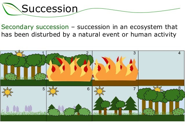 essay on secondary succession Ecological succession ns gwhs an ecological succession is when one community is replaced by another secondary succession however ecological succession essay.
