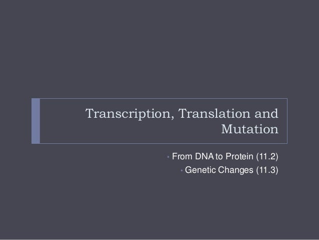 Transcription, Translation and Mutation •  From DNA to Protein (11.2) • Genetic Changes (11.3)