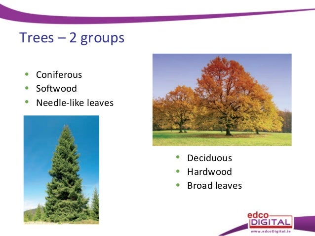 types of trees with pictures pdf