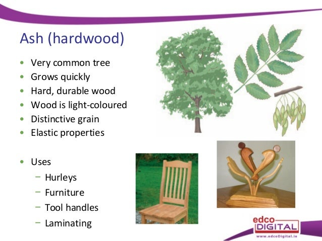 08 Types Of Tree