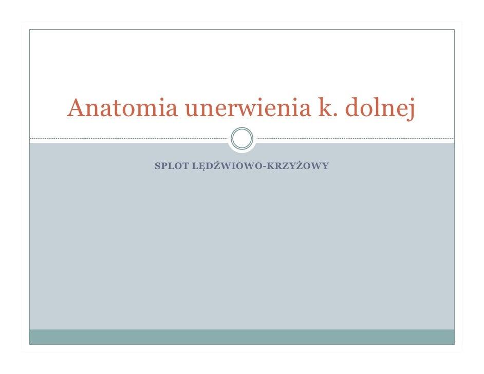 Anatomia unerwienia k. dolnej         SPLOT LĘDŹWIOWO-KRZYŻOWY