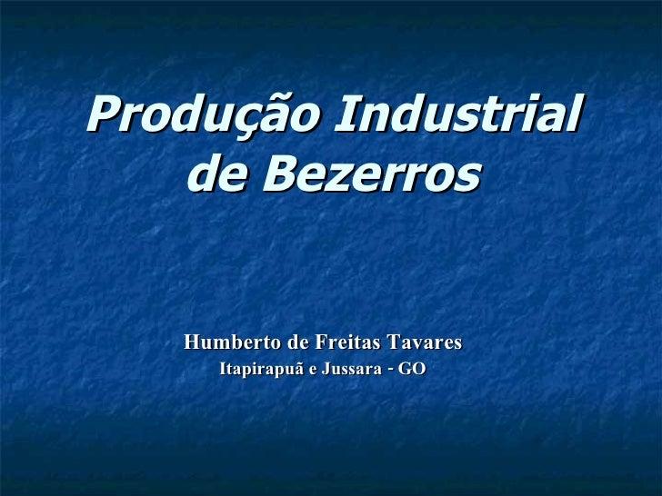 Produção Industrial de Bezerros Humberto de Freitas Tavares Itapirapuã e Jussara - GO