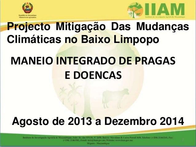 MANEIO INTEGRADO DE PRAGAS E DOENCAS Projecto Mitigação Das Mudanças Climáticas no Baixo Limpopo Agosto de 2013 a Dezembro...