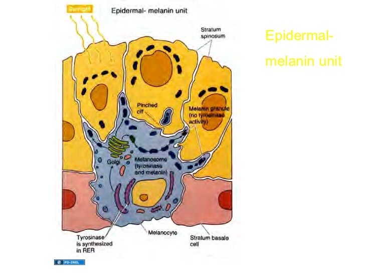 testosterone deficiency in women symptoms