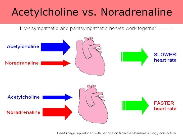 cholesterol hormone steroid