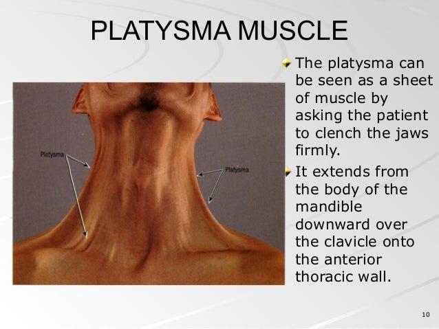 posterior triangle of neck