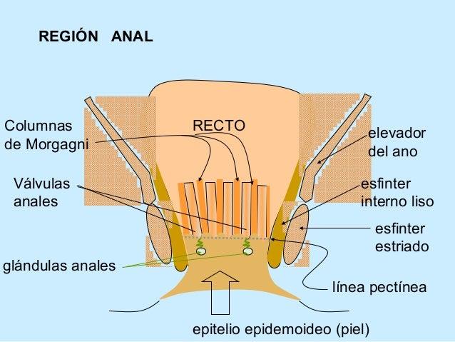 09 región anal
