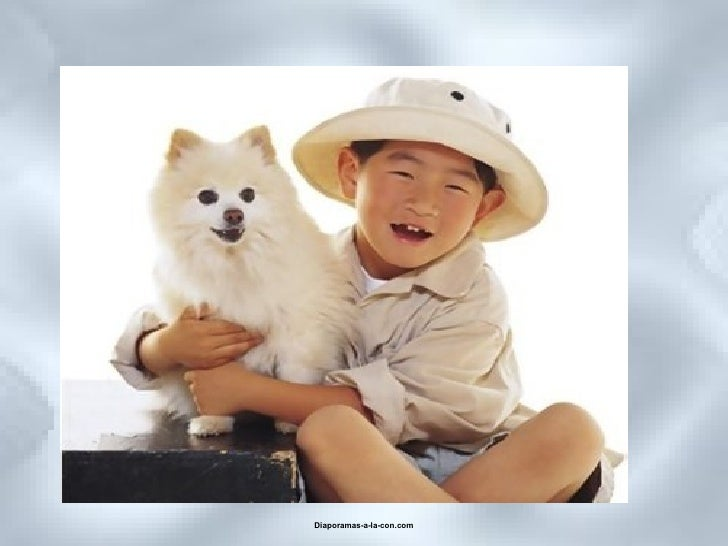 Retrouvez les meilleurs diaporamas PPS d'humour et de divertissement sur  http://www.diaporamas-a-la-con.com
