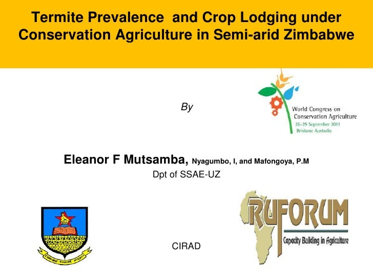 Termite Prevalence and Crop Lodging underConservation Agriculture in Semi-arid Zimbabwe                              By   ...