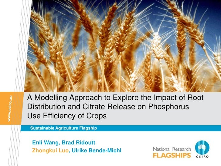 A Modelling Approach to Explore the Impact of RootDistribution and Citrate Release on PhosphorusUse Efficiency of CropsSus...