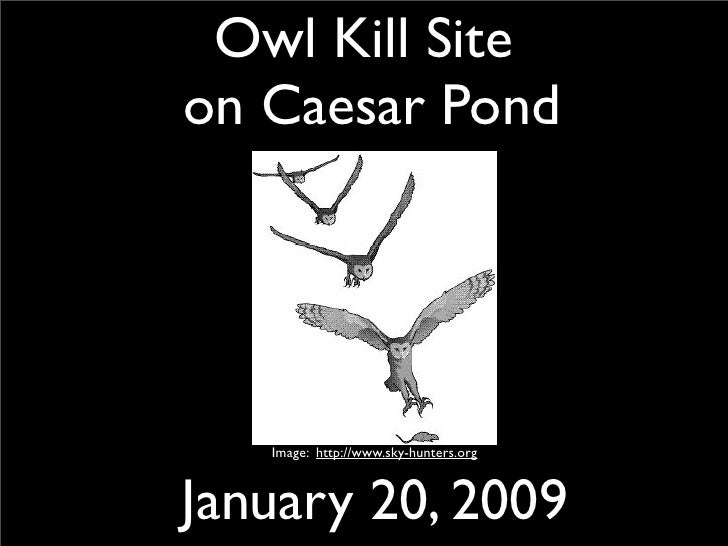 Owl Kill Site on Caesar Pond        Image: http://www.sky-hunters.org    January 20, 2009