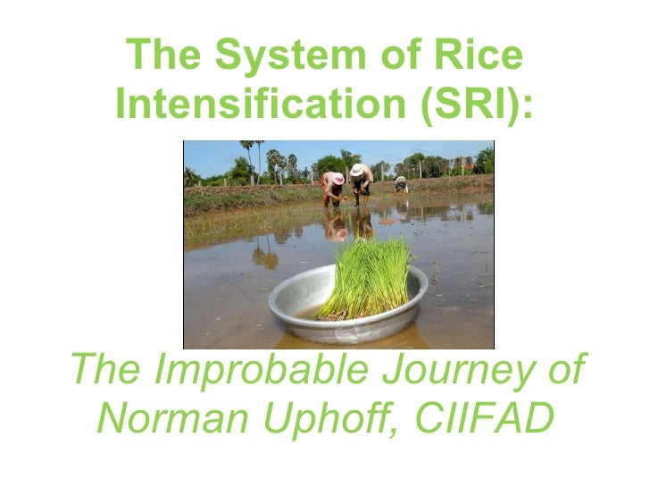 The System of Rice Intensification (SRI): The Improbable Journey of  Norman Uphoff, CIIFAD