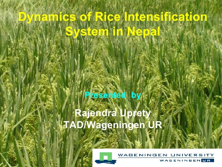 Dynamics of Rice Intensification System in Nepal Presented  by Rajendra Uprety TAD/Wageningen UR