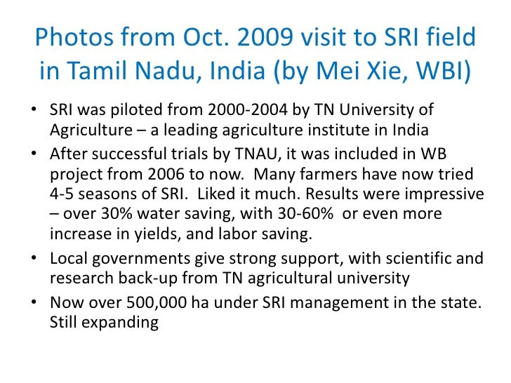 Photos from Oct. 2009 visit to SRI field in Tamil Nadu, India (by Mei Xie, WBI)<br />SRI was piloted from 2000-2004 by TN ...
