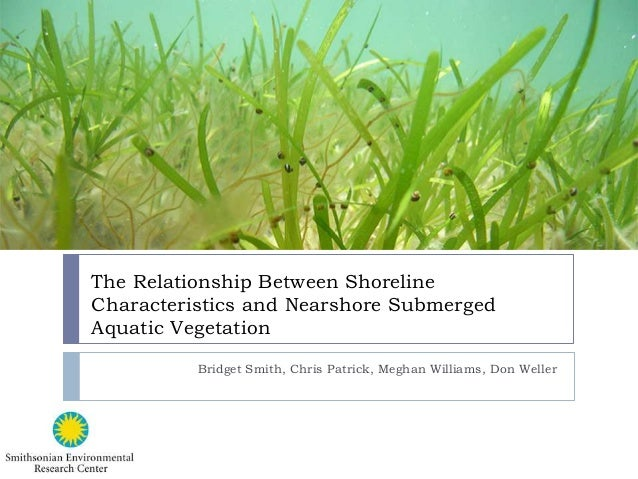 The Relationship Between Shoreline Characteristics and Nearshore Submerged Aquatic Vegetation Bridget Smith, Chris Patrick...