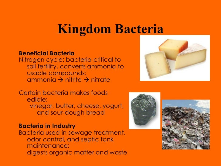 bacteria helpful and harmful essay Read this full essay on bacteria: helpful and harmful gram negative bacteria  such as salmonella & ecoli, on the other hand, has lipopolysccharrides (lp.