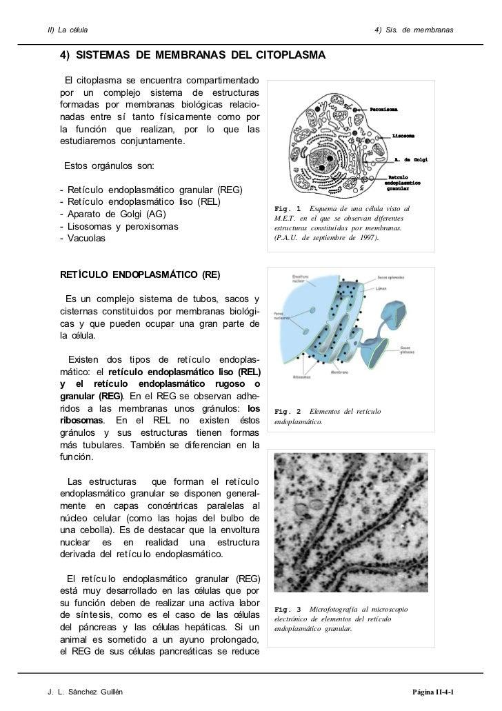 II) La célula                                                                  4) Sis. de membranas   4) SISTEMAS DE MEMBR...